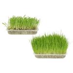 Herba soft - Erba gatta da coltivare
