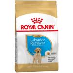 Labrador Retriever Puppy 12 kg