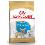 Chihuahua Puppy 500g