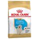 Golden Retriever puppy 3kg